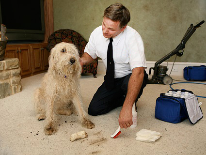 Thorough Carpet Cleaning and Maintenance Is a Necessary Task in Upland
